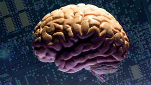 brain_circuits_ars