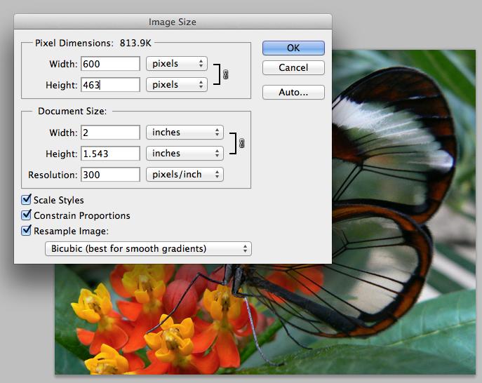 300 pixels per in